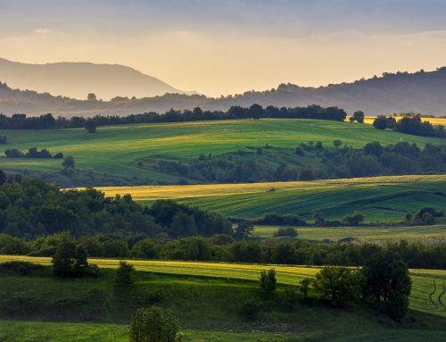 Analýza: Problém rozdrobenosti vlastníctva pôdy na Slovensku a jeho riešenie