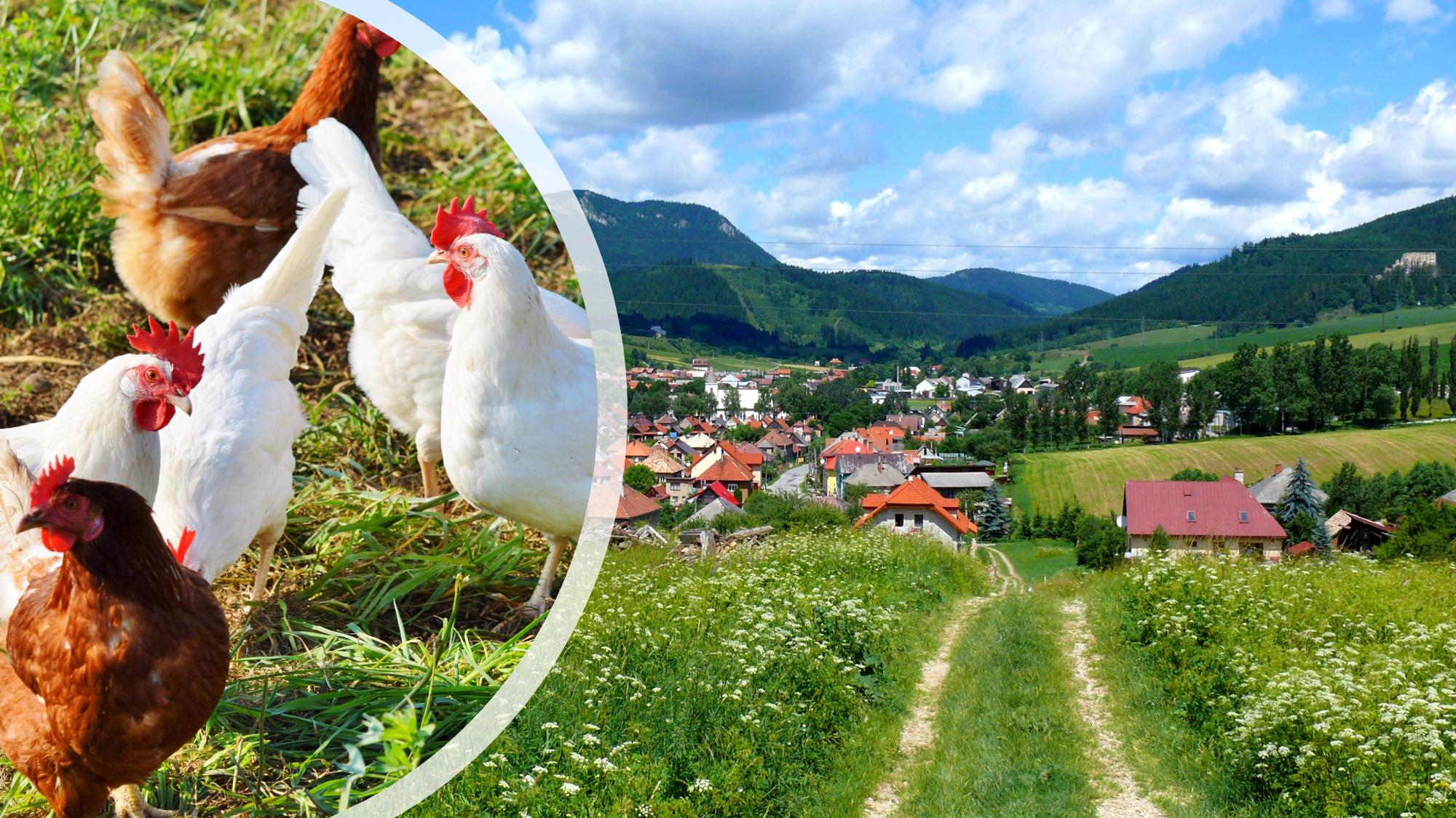 Video: Slovenskí hydinári krvácajú, napriek tomu zostávajú bez štátnej podpory